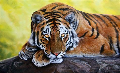 tiger paint tiger painting for sale how to draw and paint animals