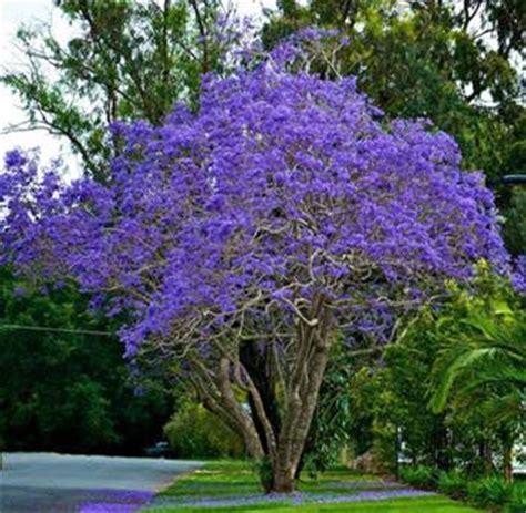cherry tree zone 9b small ornamental trees zone 9 garden inspiration