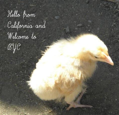 Backyard Chickens Gainesville Fl Newbie From Gainesville Fl Backyard Chickens