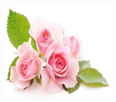 imagenes flores bellas gratis fotos de flores para compartir en facebook y whatsapp