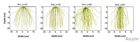 Names Of Modified Roots by Team Imperial College Project Auxin Modelling