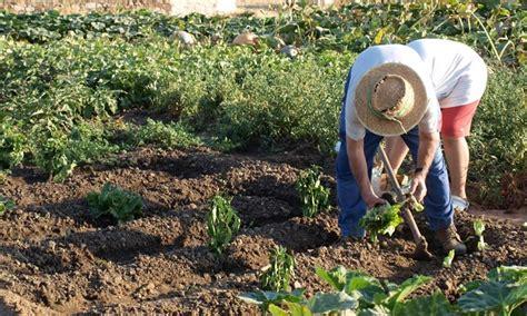 coltivare ortaggi in vaso coltivare l orto coltivazione ortaggi come coltivare