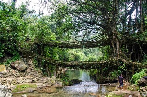living bridges meghalaya s double decker live root bridges