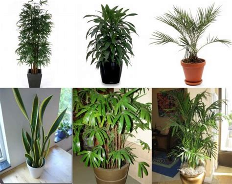 household plants household plants a great alternative to air purifiers