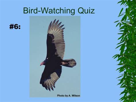bird watching quiz