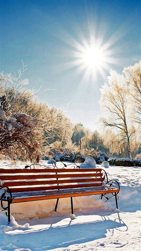 winter snowy sunshine bright bench park nature dandelion