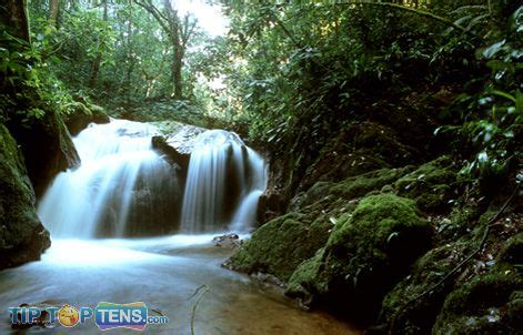 amazon most popular top 10 biggest and popular rainforests in the world