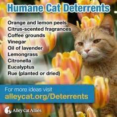 how to keep cats out of flower beds keep cats out of garden with coffee grounds citrus peels
