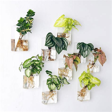 Wall Mounted Flower Vases Mkono 2 Pcs Wall Mounted Glass Vase Wall Hanging Planter