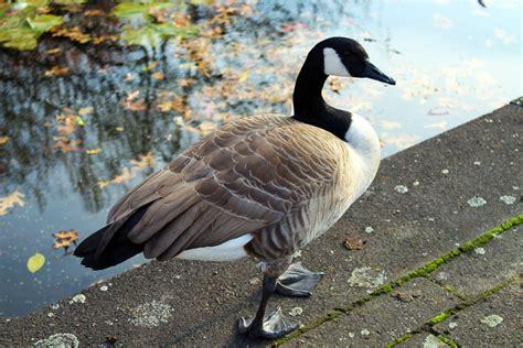 Gartenteich Tiere by Free Images Nature Wing Pond Wildlife Portrait Beak