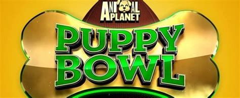 puppy bowl start time puppy bowl 2018 live start time network and pre show