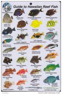 fish photos and names images