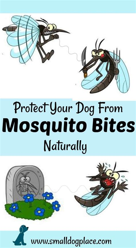 Bite Fighters Botanical Mosquito 12pc mosquito bites on dogs dangers and prevention tips