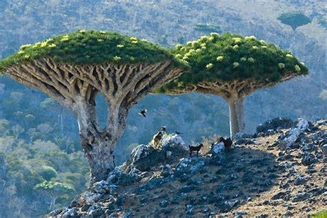kumpulan berita aneh di dunia 10 tumbuhan langka di dunia kumpulan berita aneh cerpen