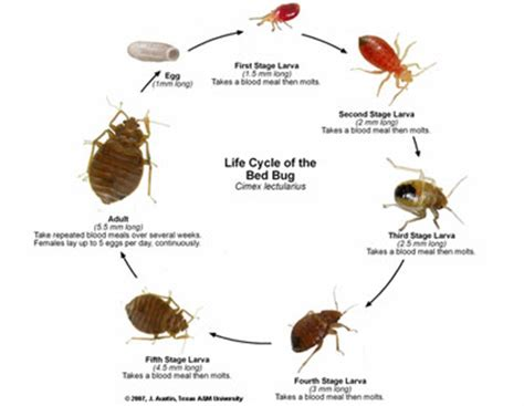 Clear Bed Bugs by Bed Bugs