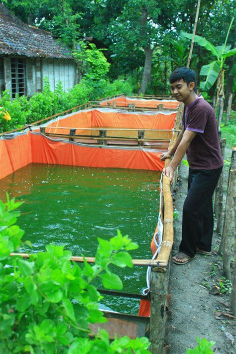 Harga Terpal Kolam Udang beternak lele di kolam terpal info akuakultur