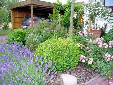 passende pflanzen zu lavendel echter lavendel lavandula angustifolia baumschule