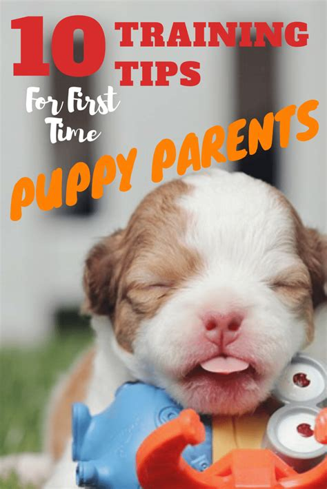10 Tips For Time Parents by 10 Tips For Time Puppy Parents