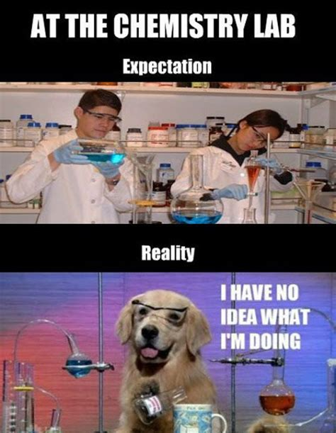 Chemistry Dog Meme - at the chemistry lab viral viral videos
