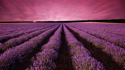 wallpaper lavender field sky mountain provence france