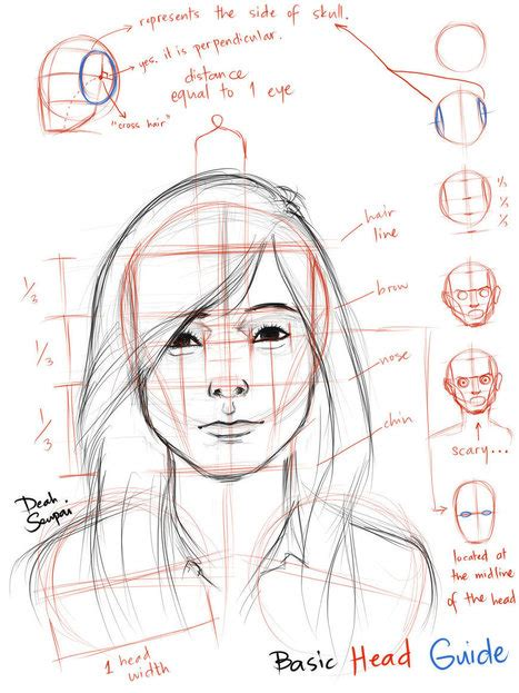 Drawing Guide Proportions Reference Guide Drawing Re
