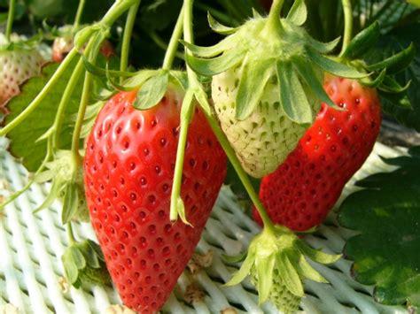 program ilmu menarik benda ghoib tk mahaguru belajar di kebun buah berguru