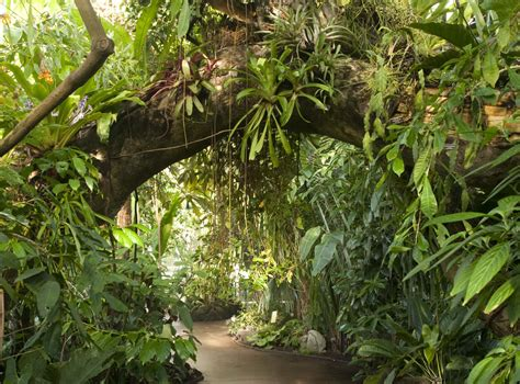 can you buy plants on amazon rainforest archives plant talk