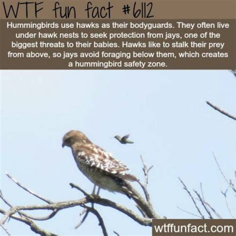 17 best images about avian on pinterest herons peacocks