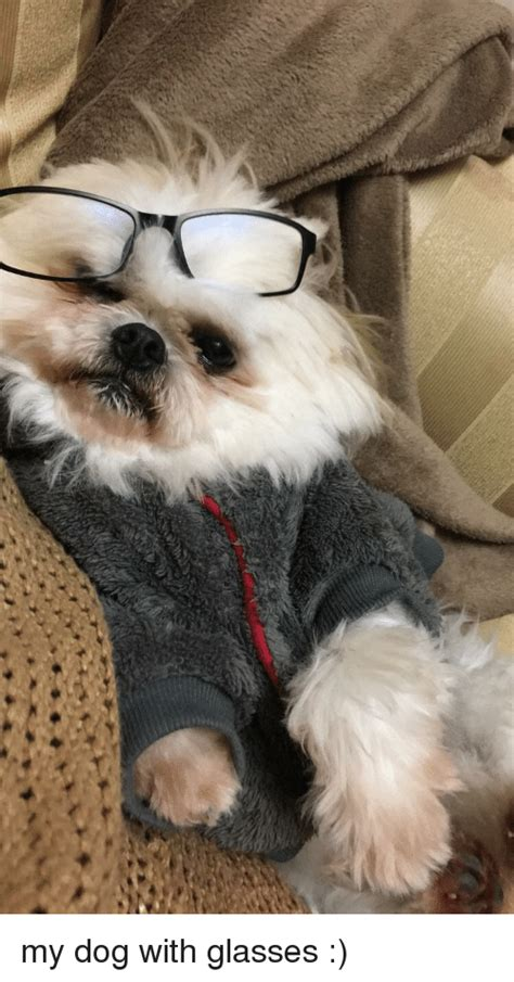 Dog With Glasses Meme - 25 best memes about dog with glasses dog with glasses memes