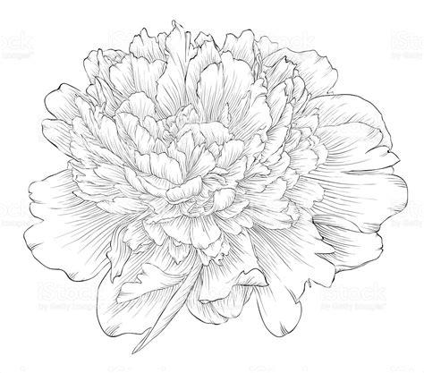 magnifique monochrome noir et blanc fleur de pivoine isol 233