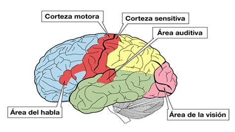 imagenes sensorial definicion y ejemplos sistema sensorial