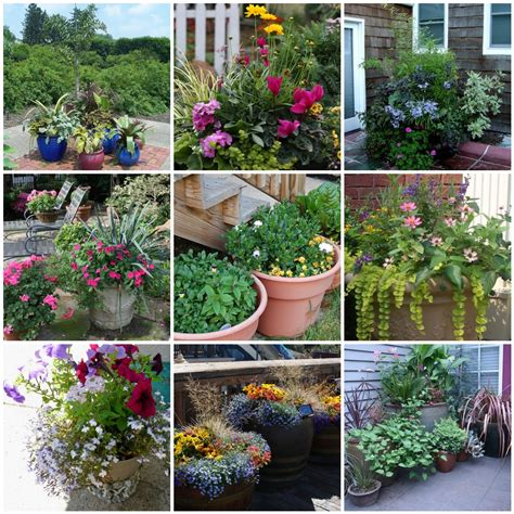 Potted Garden Ideas Gift Plants And Plant Ideas Container Garden For You