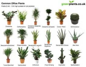 Plants For The Office by Be More Productive Get Some Plants On Your Desk