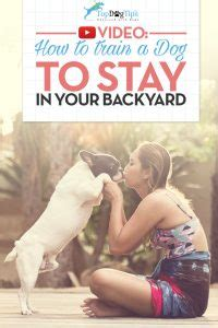 How To Teach Your To Stay The by How To A To Stay In The Yard A Brief