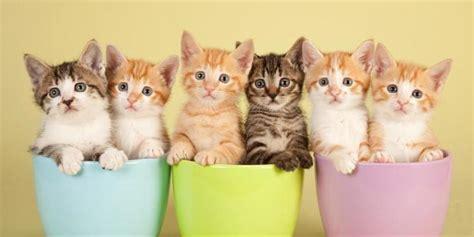 kucing diserahkan  penampungan hewan roane merdekacom