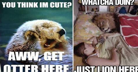funny animal pun memes     laugh