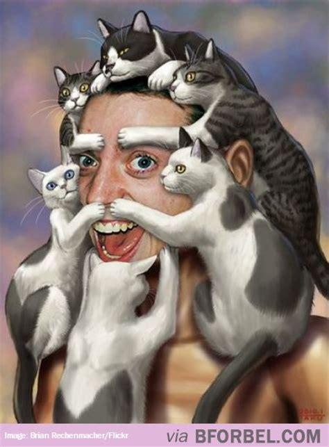 Crazy Cat Man Meme - crazy cat man memes