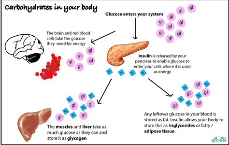 carbohydrates hormones carbohydrate and insulin get to your hunger hormones