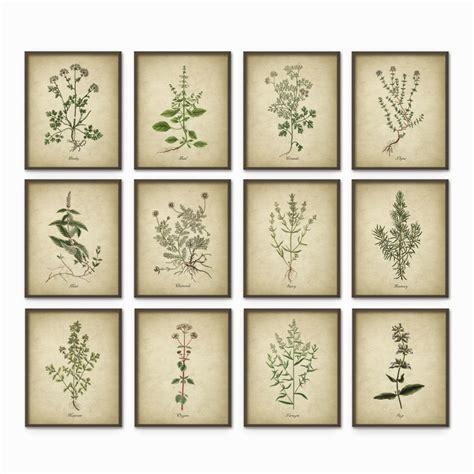 printable wall art sets kitchen herbs wall art print set of 12 vintage botanical