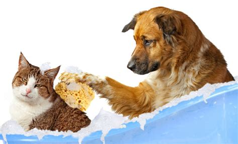 dog and cat house grooming pet grooming
