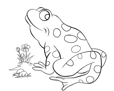 green frog coloring page frogs coloring pages