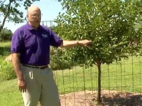 protecting fruit trees from deer protect fruit trees from deer
