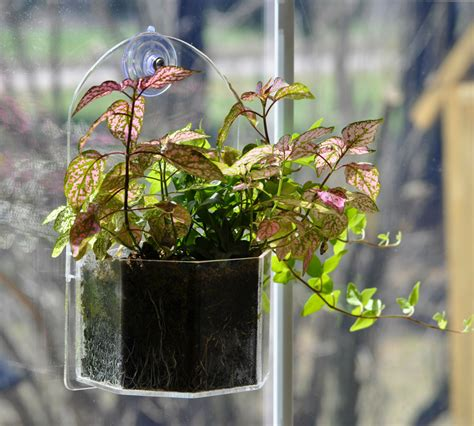Suction Cup Planter by Window Planter Grow Plants Indoors And Outdoors From Your