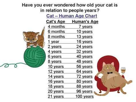 age in cat years