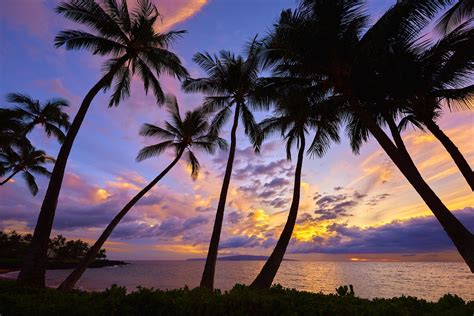 sunset palm trees wallpaper  images