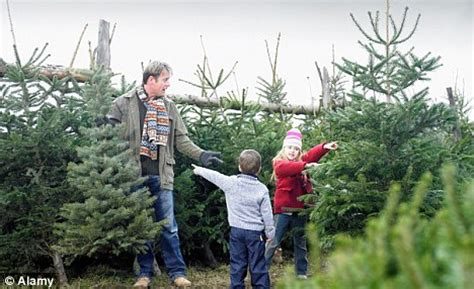 christmas tree farm supplies