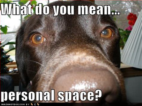 T Dog Memes - stuff by cher let there be space in your togetherness