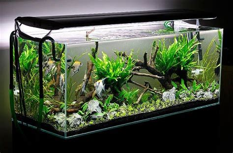 How To Aquascape A Planted Tank by Aquascaping Planted Aquarium Aquascaping Aquascape