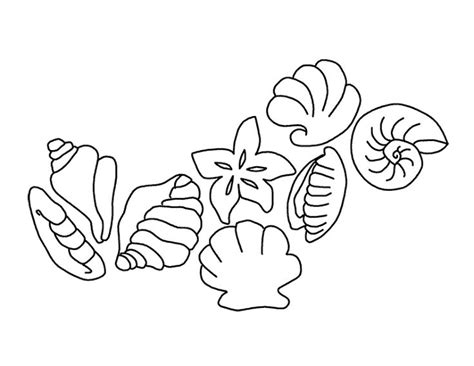 seashells coloring pages  printable coloring pages