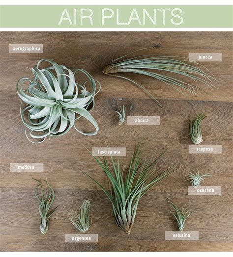air plants care and styling warm hot chocolate